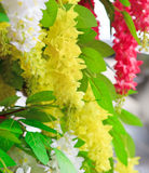 Yellow flower blooming and green leaves Stock Photo