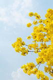 Yellow flower with blue sky Stock Photos
