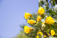 Yellow flower with blue sky Royalty Free Stock Photos