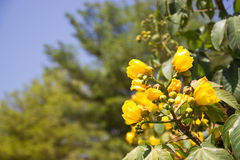 Yellow flower with blue sky Royalty Free Stock Images