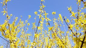 Yellow flower on blue sky Stock Photos