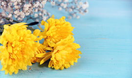 Yellow Flower and blue Wood Background. Yellow Flower Concept and Decoration stock photography