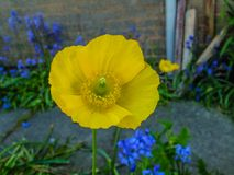 Beautiful picture of yellow flower Royalty Free Stock Photography