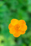 Yellow Flower on a Blurry Background Stock Photography