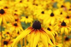 Yellow flower bokeh Stock Photography