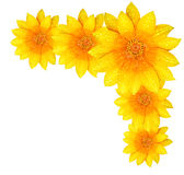 Yellow flower border Stock Image