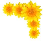 Yellow flower border stock image