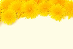 Yellow Flower Border Isolated Royalty Free Stock Photo