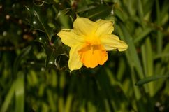Yellow flower !! Royalty Free Stock Images