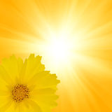 Yellow flower on bright background Stock Photo