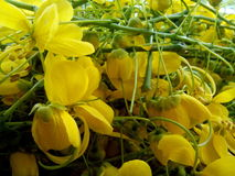 Yellow flower. A bunch of beautiful yellow flower with buds stock photos