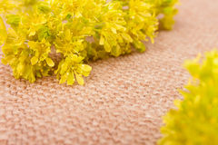 Yellow Flower on the Burlap Background Royalty Free Stock Image