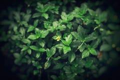 Yellow flower bush Stock Images