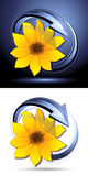 Yellow flower buttons Stock Images