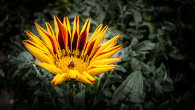 Yellow flower Stock Photo