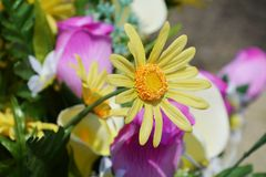 Yellow flower, close up Royalty Free Stock Photo
