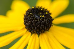 Yellow flower close up. stock photography