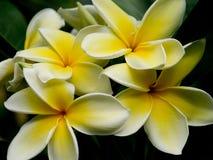 Yellow Flower Stock Photography