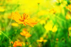 Yellow flower closeup Royalty Free Stock Photography