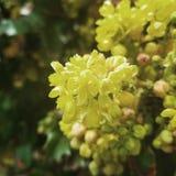 Yellow flower closeup royalty free stock photo
