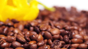 Yellow flower on coffee beans. Yellow tulip on coffee beans. stock footage