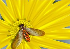 Yellow flower and colored fly Royalty Free Stock Photos
