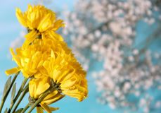 Yellow Flower. Concept and Decoration royalty free stock images