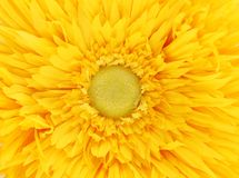 Yellow flower core closeup. Stock Photo