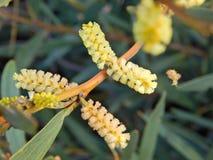 Yellow flower in dune Stock Photos