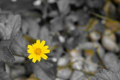 Yellow flower by electronic filter technic camera. Flower on yel royalty free stock photos