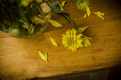 Yellow flower. A flower fallen out of a vase Royalty Free Stock Photos