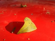 Yellow flower falling on red car Stock Photography