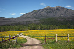 Yellow Flower Farm Road Fence Countryside Montana Royalty Free Stock Photography
