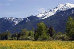Yellow Flower Farm Snow Mountain Montana royalty free stock photography