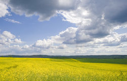 Yellow flower field Royalty Free Stock Photos