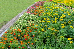 Yellow flower Field / Meadow with calendula flowerbed decoralate Royalty Free Stock Image