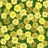 Yellow flower field seamless Stock Photography