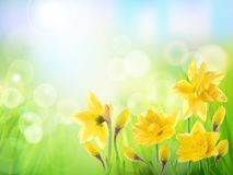Yellow flower on the field. Stock Image