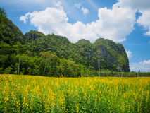 Yellow flower fields with mountain and blue sky background Stock Photography