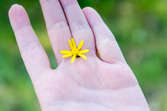 Yellow flower between fingers of the hand. Hygiene and hand care. Heromantiya. Guessing on the arm. Royalty Free Stock Images