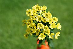 Yellow, Flower, Flora, Plant stock photography