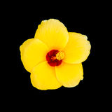 Yellow flower. S on a black background stock photo