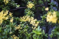 Yellow flower. S between greenish bushes stock image