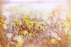 Yellow flower - flowers in meadow. Yellow flower flowers in meadow - flowering meadow in spring, beautiful nature Stock Photos