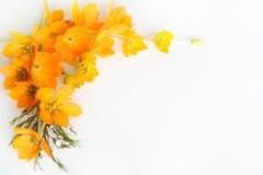 Yellow flower frame royalty free stock photo