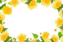 Yellow flower frame Stock Image