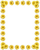 Yellow flower frame with copy space Royalty Free Stock Photography