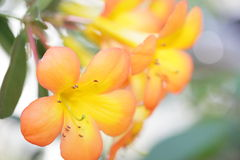 Yellow flower in a garden Royalty Free Stock Photos