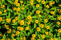 Yellow flower in the garden. On holiday Royalty Free Stock Photos