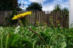 Yellow flower in the garden Stock Photo